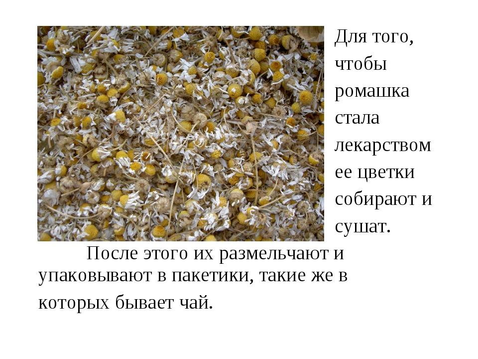 Для того, чтобы ромашка стала лекарством ее цветки собирают и сушат. После...