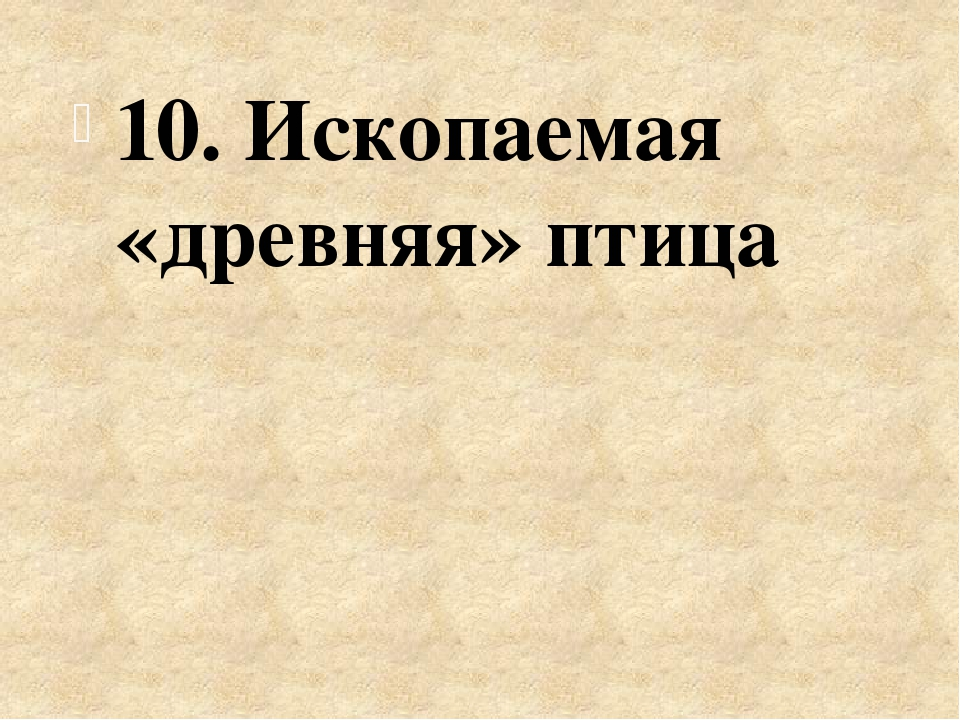 10. Ископаемая «древняя» птица