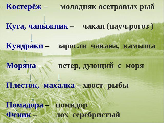 Костерёж – молодняк осетровых рыб Куга, чапыжник – чакан (науч.рогоз ) Кундра...
