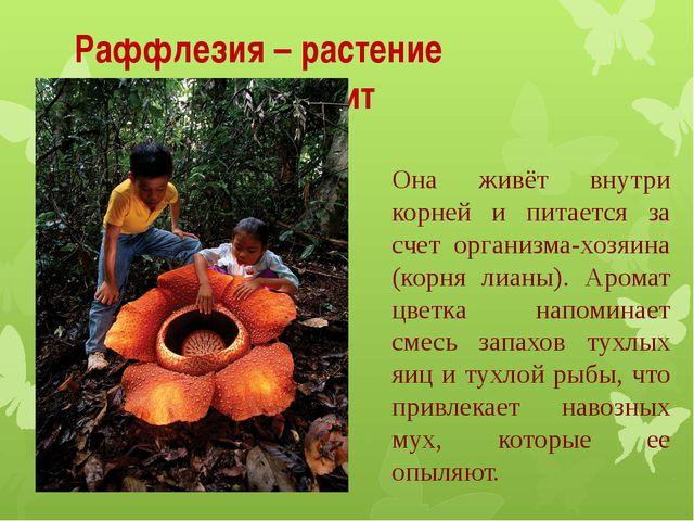 Она живёт внутри корней и питается за счет организма-хозяина (корня лианы). А...