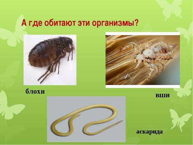 А где обитают эти организмы? вши аскарида блохи