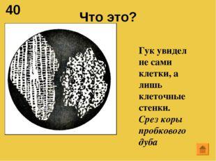 40 Что это? Гук увидел не сами клетки, а лишь клеточные стенки. Срез коры про