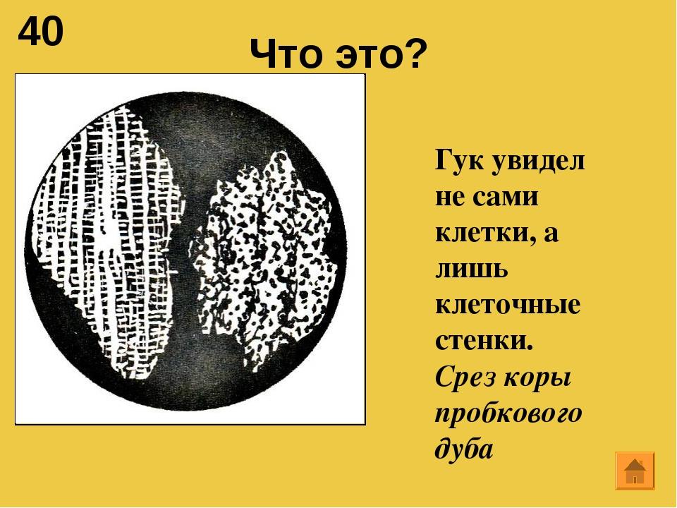 40 Что это? Гук увидел не сами клетки, а лишь клеточные стенки. Срез коры про...