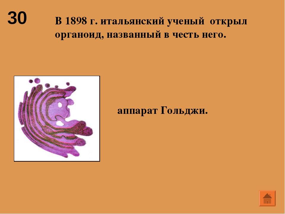 30 В 1898 г. итальянский ученый открыл органоид, названный в честь него.