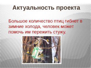 Актуальность проекта Большое количество птиц гибнет в зимние холода, человек
