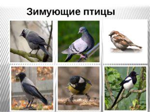 Зимующие птицы Фото синицы, воробья, вороны, сороки, голубя, галки