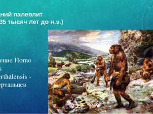 Средний палеолит (150-35 тысяч лет до н.э.) Появление Homo sapiens neandertha