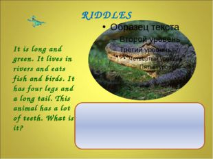 It is long and green. It lives in rivers and eats fish and birds. It has fou