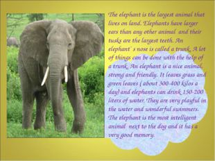 The elephant is the largest animal that lives on land. Elephants have larger