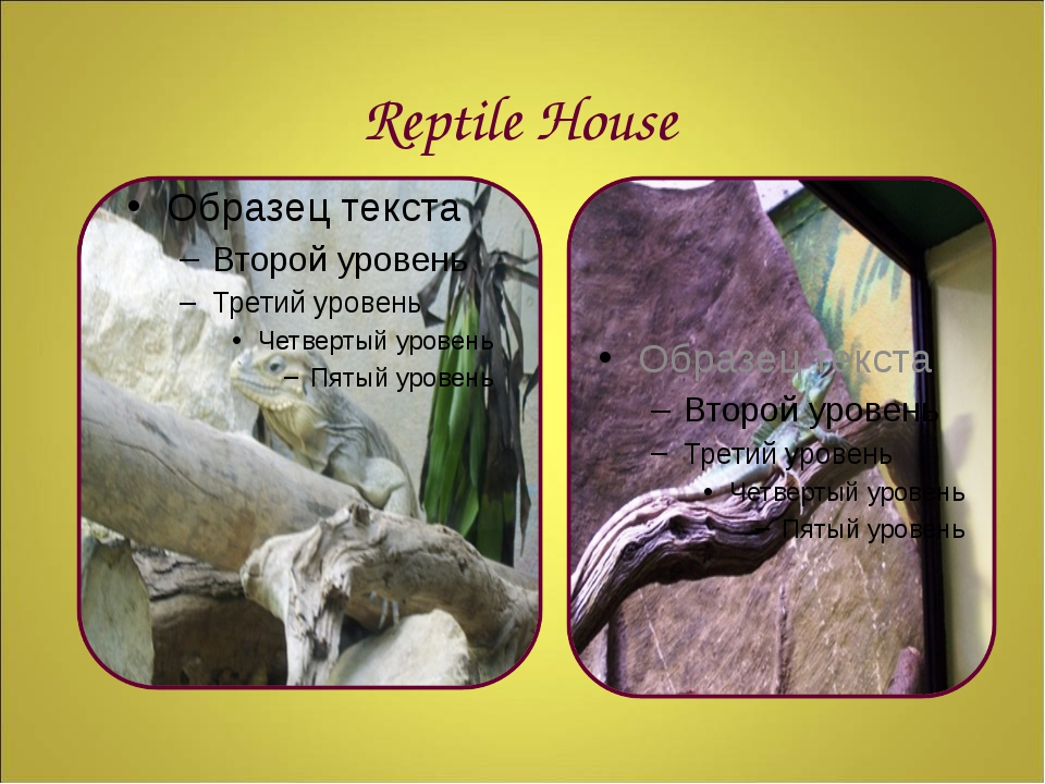 Reptile House
