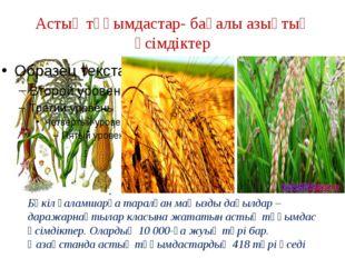 Астық тұқымдастар- бағалы азықтық өсімдіктер Бүкіл ғаламшарға таралған маңызд