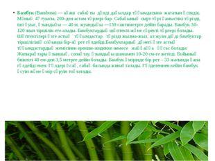 Бамбук(Bambusa) —ағаш сабақты дәнді дақылдар тұқымдасына жататын өсімді