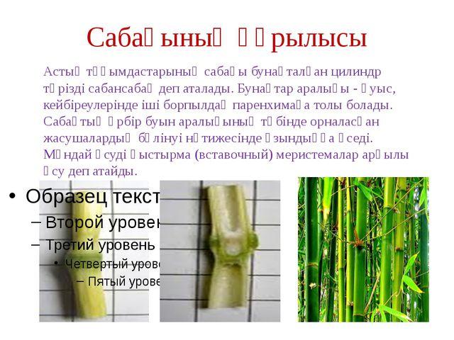 Сабағының құрылысы Астық тұқымдастарының сабағы бунақталған цилиндр тәрізді с...