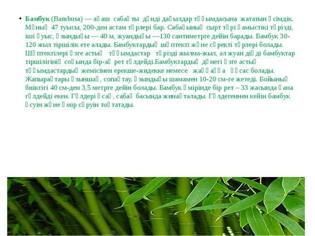 Бамбук(Bambusa) —ағаш сабақты дәнді дақылдар тұқымдасына жататын өсімді...