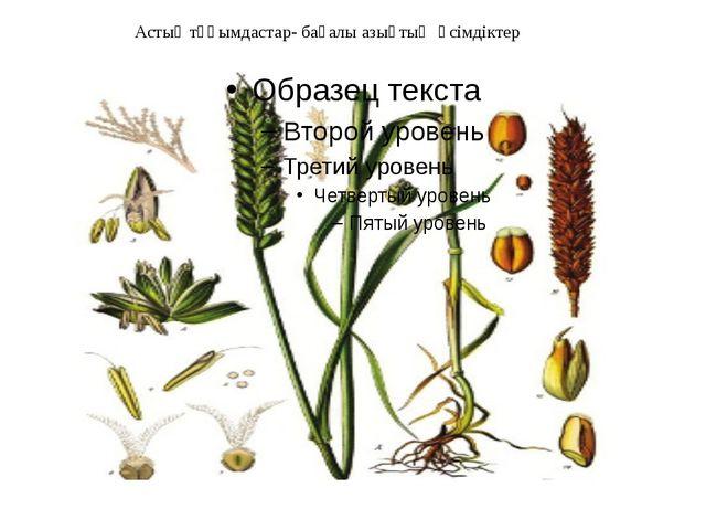 Астық тұқымдастар- бағалы азықтық өсімдіктер