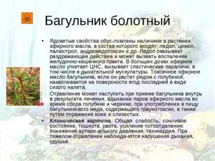 Багульник болотный Ядовитые свойства обусловлены наличием в растении эфирног