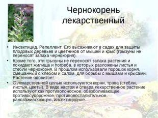 Чернокорень лекарственный Инсектицид. Репеллент. Его высаживают в садах для з