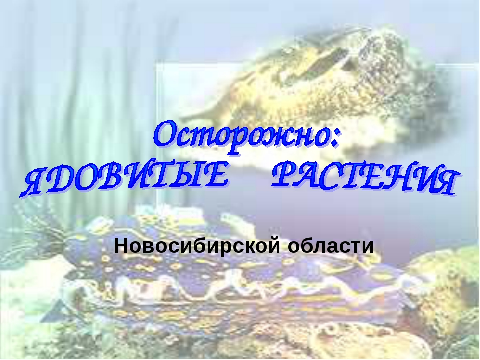 Новосибирской области