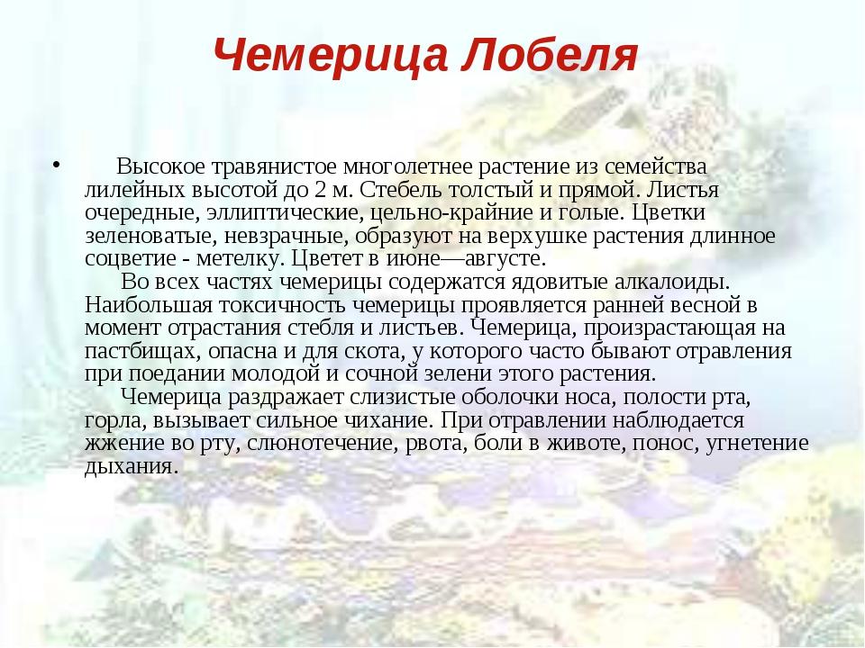 Чемерица Лобеля  Высокое травянистое многолетнее растение из семейства ли...