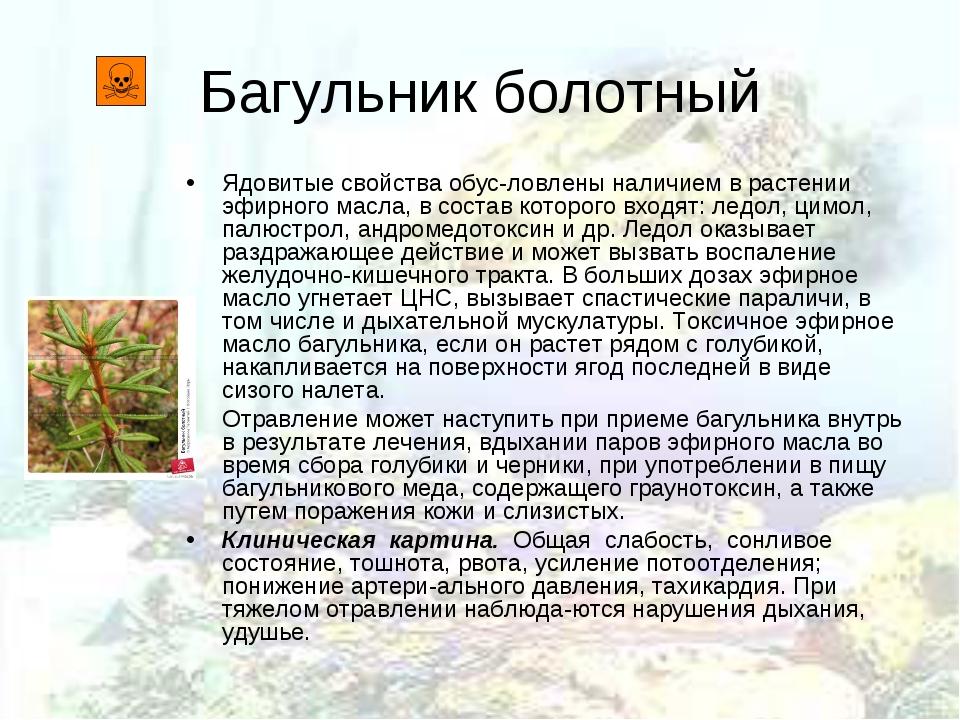 Багульник болотный Ядовитые свойства обусловлены наличием в растении эфирног...