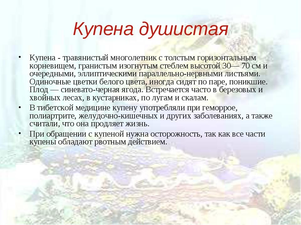 Купена душистая Купена - травянистый многолетник с толстым горизонтальным кор...