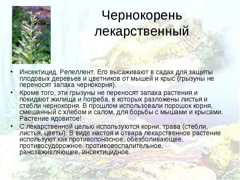 Чернокорень лекарственный Инсектицид. Репеллент. Его высаживают в садах для з...