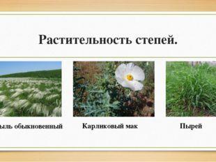 Растительность степей. Ковыль обыкновенный Карликовый мак Пырей