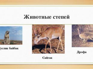Животные степей Суслик байбак Дрофа Сайгак