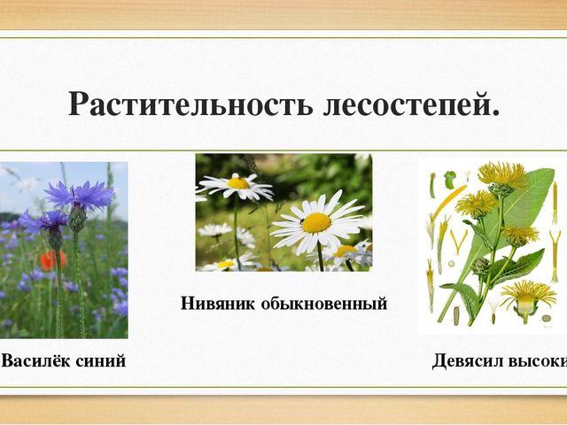 Растительность лесостепей. Василёк синий Нивяник обыкновенный Девясил высокий