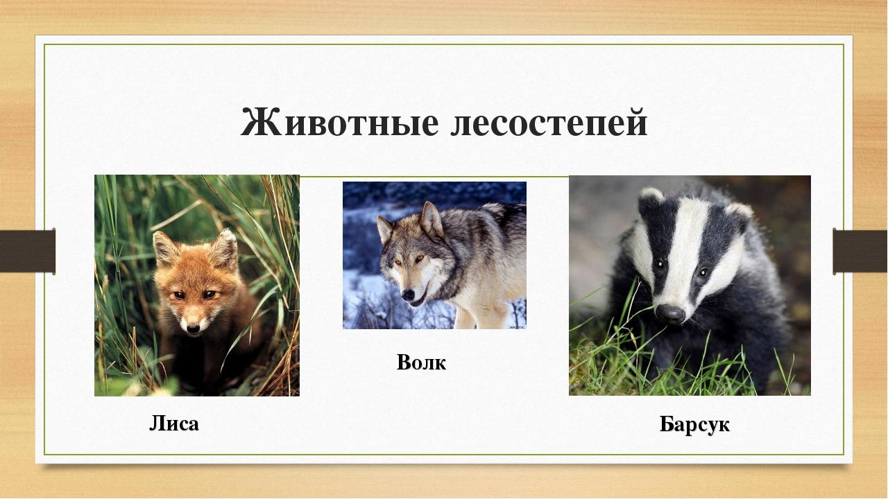 Животные лесостепей Лиса Барсук Волк