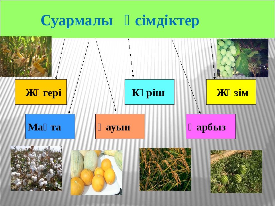 Суармалы өсімдіктер Күріш Қауын Қарбыз Жүзім Жүгері Мақта