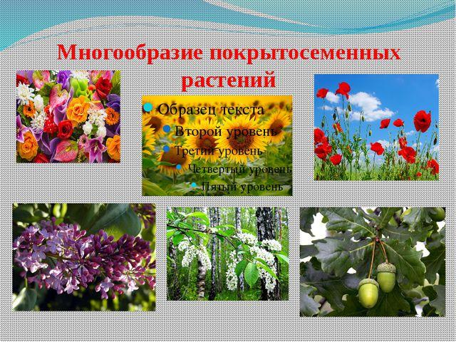 Многообразие покрытосеменных растений