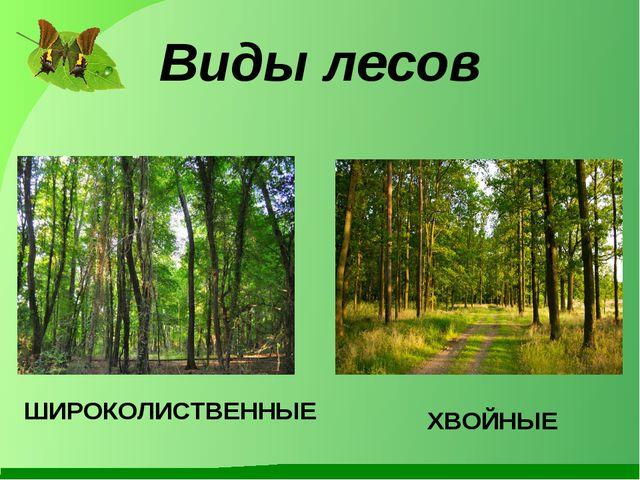 Виды лесов ХВОЙНЫЕ ШИРОКОЛИСТВЕННЫЕ