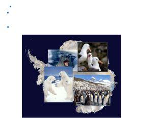 В Антарктиде зафиксирована самая низкая температура на Земле -89,2°С. Из-за о