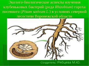 Эколого-биологические аспекты изучения клубеньковых бактерий (рода Rhizobium)