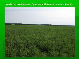 Хозяйство агрофирмы «Луч», поле №4 (сорт гороха – Фокор)