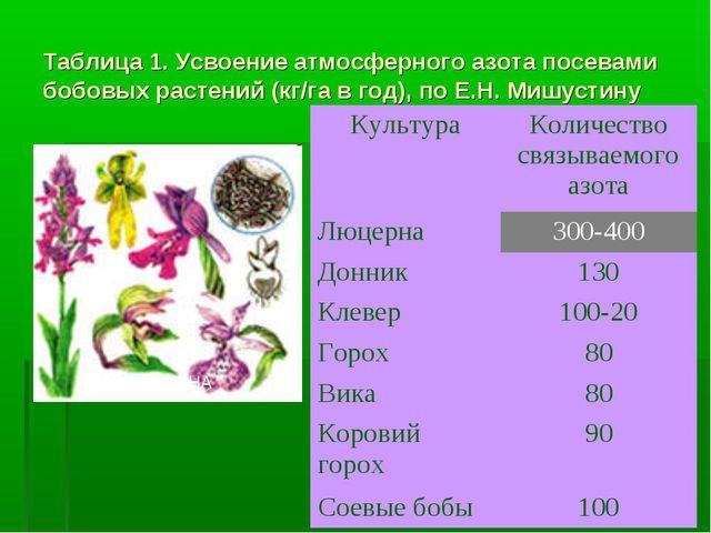 Таблица 1. Усвоение атмосферного азота посевами бобовых растений (кг/га в год...