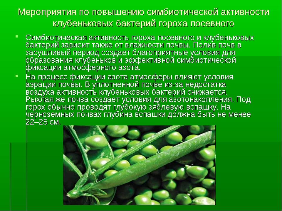 Мероприятия по повышению симбиотической активности клубеньковых бактерий горо...