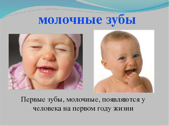 молочные зубы Первые зубы, молочные, появляются у человека на первом году жизни