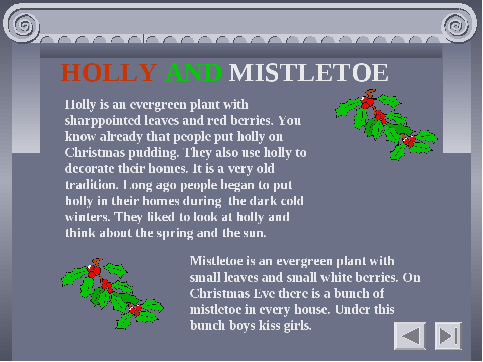 HOLLY AND MISTLETOE Holly is an evergreen plant with sharppointed leaves and...