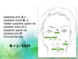Ширина рта A к ширине носа B, а также ширина щеки на уровне носа C к ширине щ