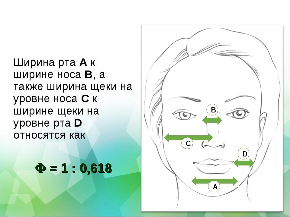 Ширина рта A к ширине носа B, а также ширина щеки на уровне носа C к ширине щ...