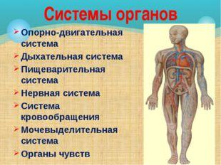 Опорно-двигательная система Дыхательная система Пищеварительная система Нервн