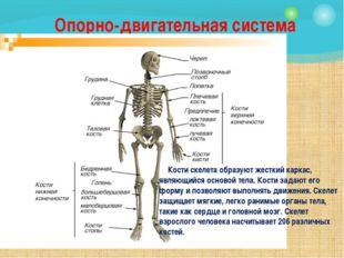 Опорно-двигательная система Кости скелета образуют жесткий каркас, являющийся
