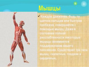 Мышцы Каждое движение, будь то щелчок пальцев или быстрая пробежка, совершает