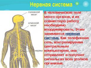 Нервная система В человеческом теле много органов, и их совместную работу не