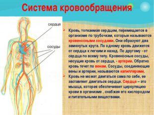 Кровь, толкаемая сердцем, перемещается в организме по трубочкам, которые назы