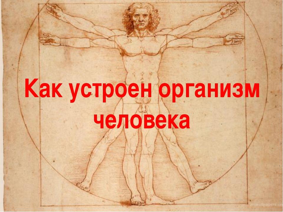 Как устроен организм человека