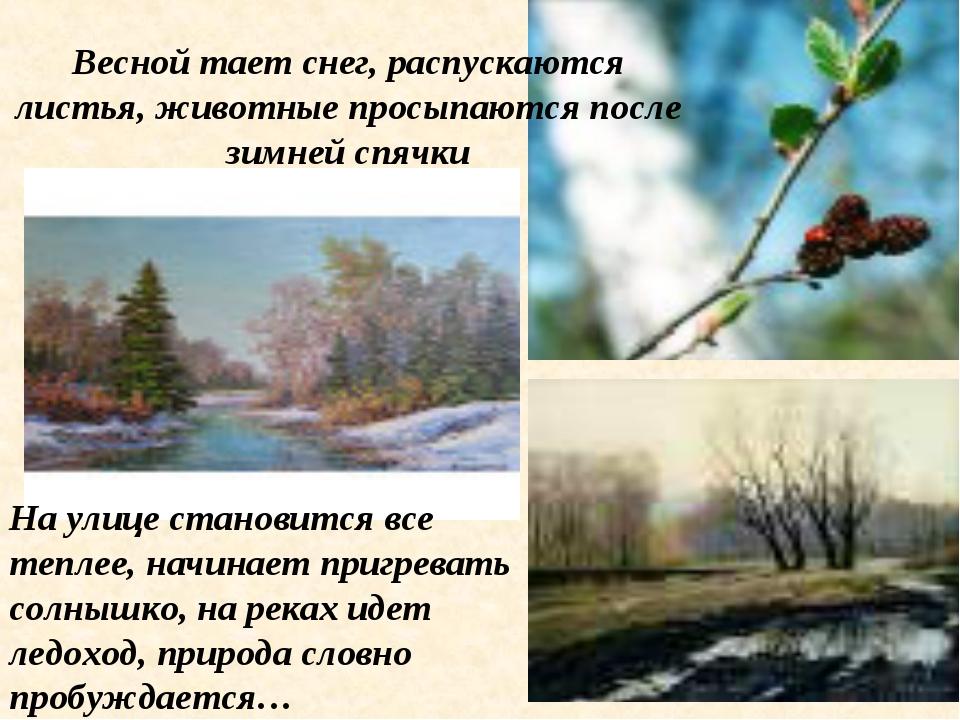 Весной тает снег, распускаются листья, животные просыпаются после зимней спяч...