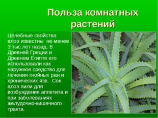 Польза комнатных растений Целебные свойства алоэ известны не менее 3 тыс.лет